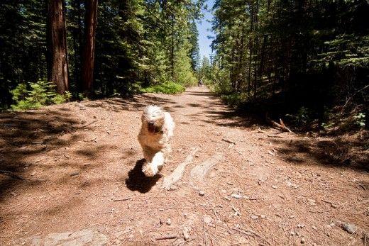 Cães obter uma grande quantidade de carrapatos na floresta.
