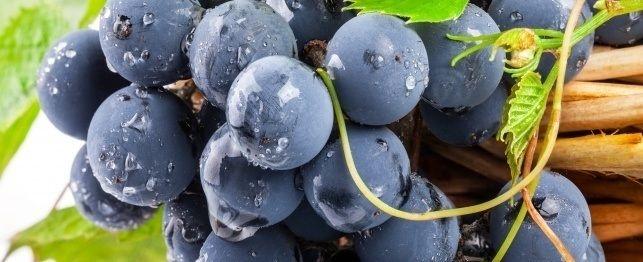 São uvas e passas muito tóxico para os cães?