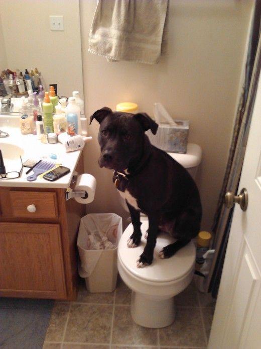 Dakota decide sair no vaso sanitário.