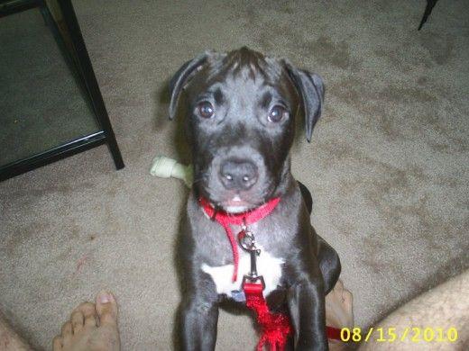 Dakota em cerca de 12 semanas de idade.