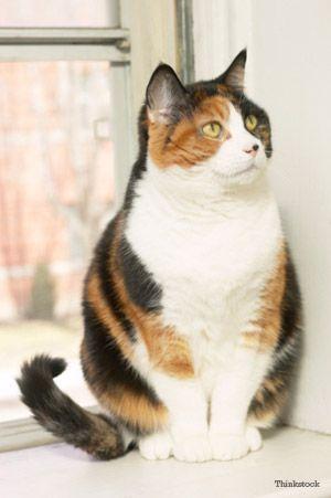 gato pela janela