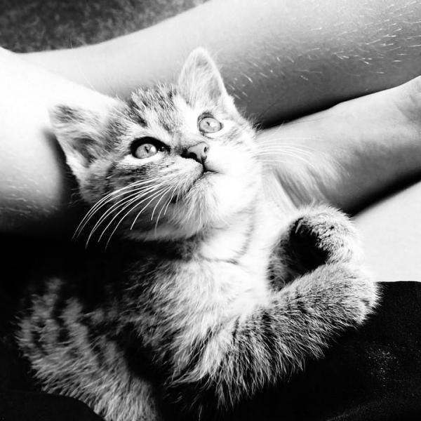 Eu posso dar o meu Antibióticos gato?