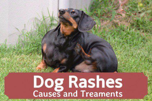 rash Dog