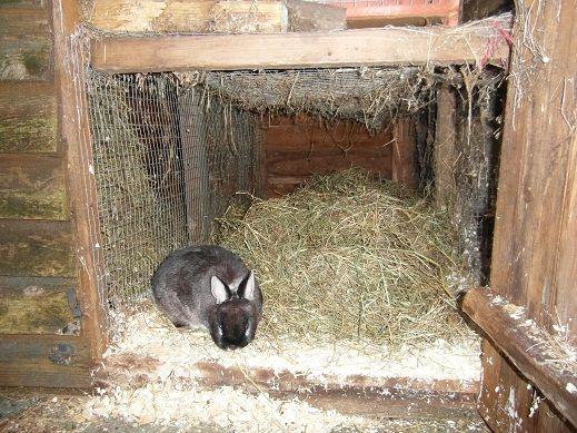 Uma secção do abrigo foi dissociado para dar uma área de cama espaçosa para um coelho anão.