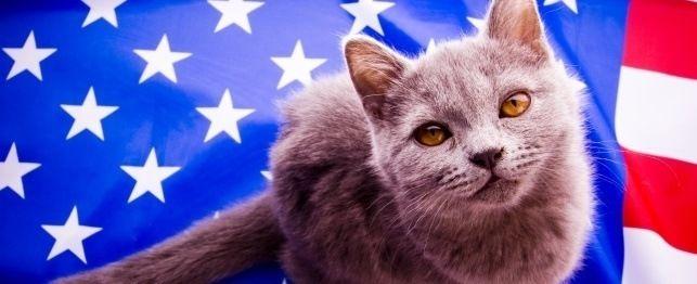 Grandes nomes para gatos patrióticos