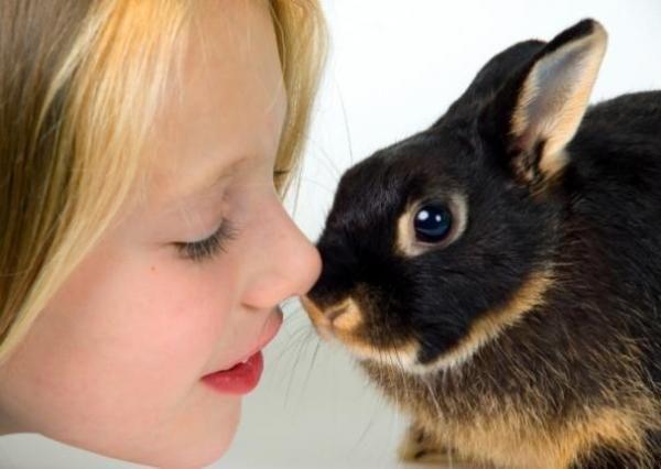 Como cuidar de um coelho anão