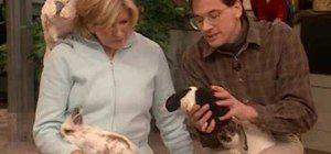 Cuidar e nutrir coelhos como animais de estimação casa