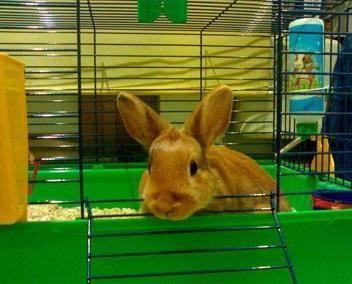 Como escolher uma gaiola de coelho - Como configurar uma gaiola de coelho