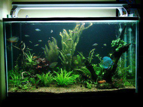 Como escolher peixes compatível para o seu aquário comunitário