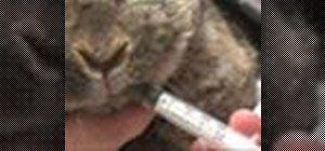 Dar medicação para um coelho