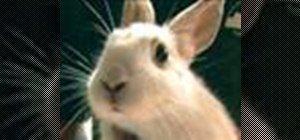 Cuidar de coelhos