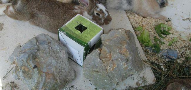 Cuidar do seu coelho anão durante o tempo quente