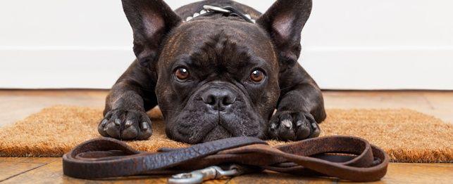 Sentar! Fique! Ler! Nossos 5 ferramentas de treinamento favoritos para cães