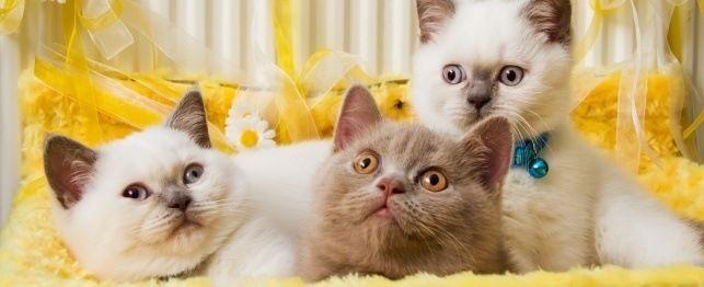 O melhor guia para nomear seu gato ou gatinho
