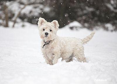 cão que jogam na neve