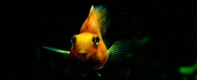 Top peixes de água doce 20