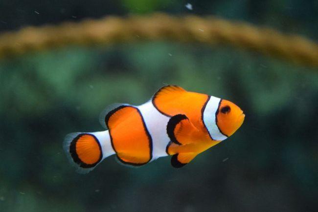 O que fazer com os peixes escritório durante o feriado