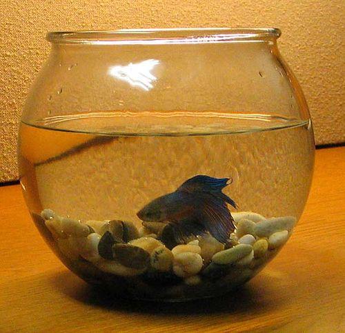 Por aquários são ruins para o seu peixe